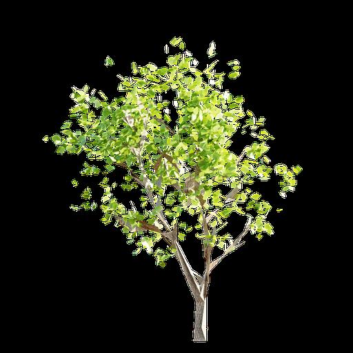 Thumbnail: Tree LOD 3
