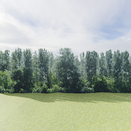 Thumbnail: Greenleaf Treeline Backdrop 002