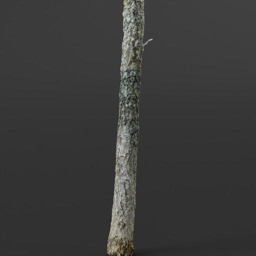 Thumbnail: Small Photoscanned Tree 04