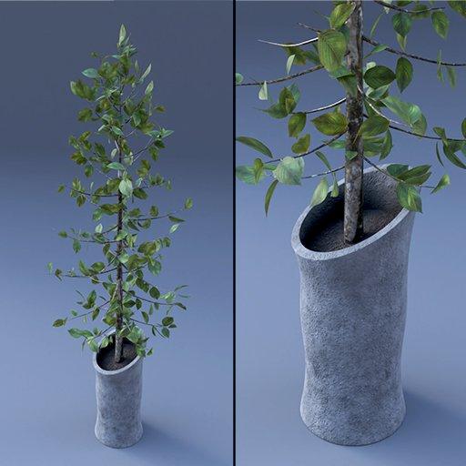 Thumbnail: Plant Vase