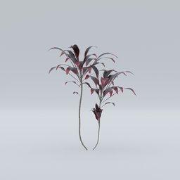 Thumbnail: Blackleaf plant