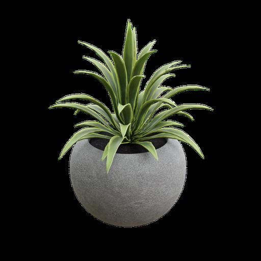 Concrete pot with plant
