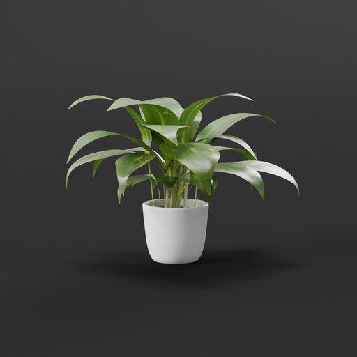 Thumbnail: Home plant