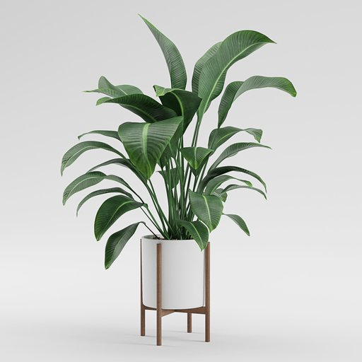 Thumbnail: Plant - Pot plant