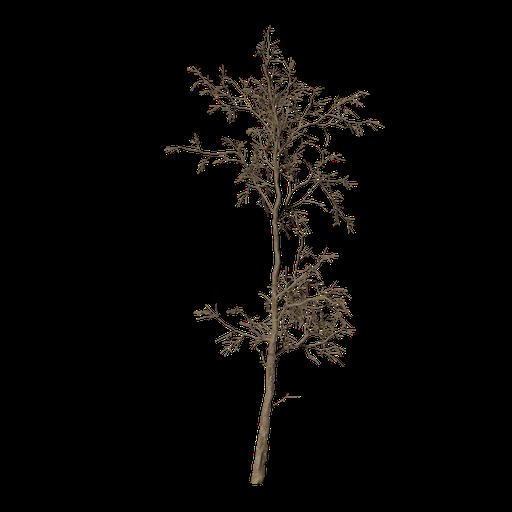 Thumbnail: Dead Tree v2