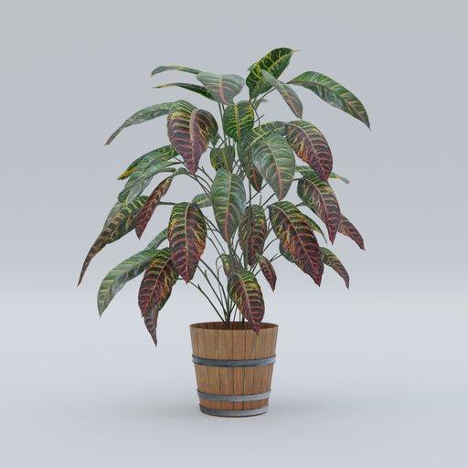 Thumbnail: Plant 8
