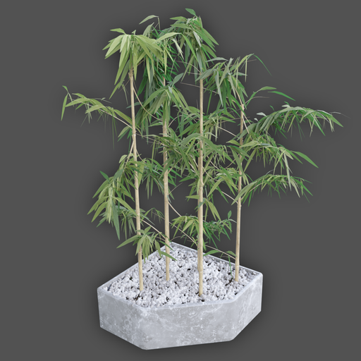 Simple Bamboo Plant