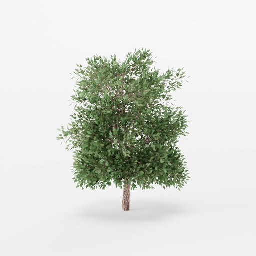 Thumbnail: Maple Tree 02