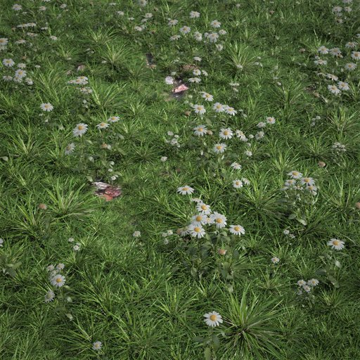 Thumbnail: Wild Grass with chamomile Large area