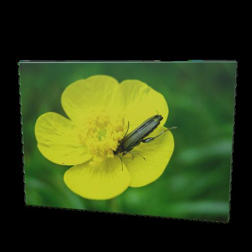 Thumbnail: Nature picture