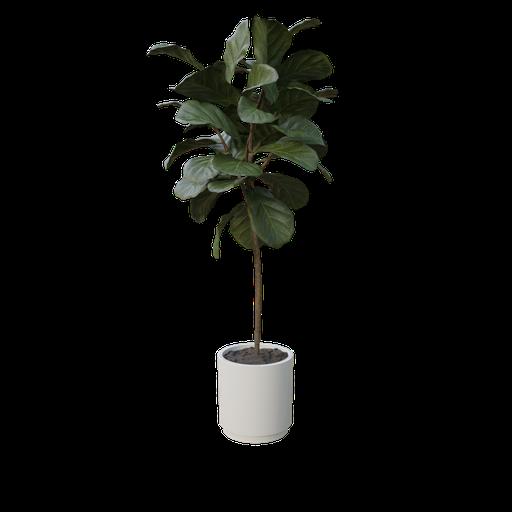 Thumbnail: Indoor Plant