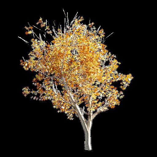 Thumbnail: Tree LOD 2 Autumn