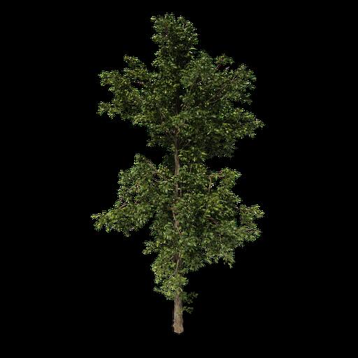 Thumbnail: Combretum wild tree