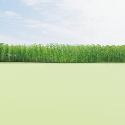 Thumbnail: Greenleaf Treeline 013 Backdrop