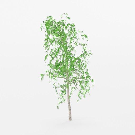 Thumbnail: Birch Tree lowpoly