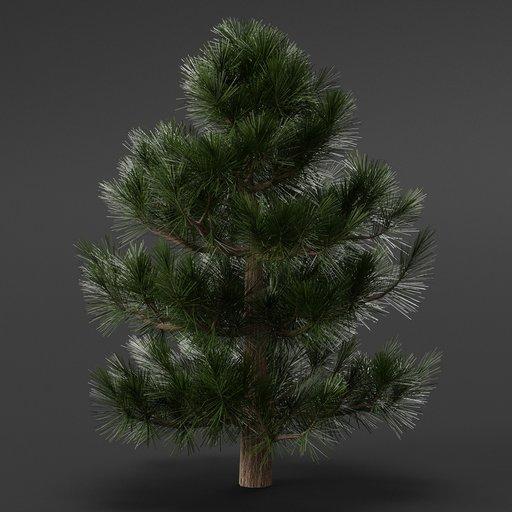 Thumbnail: Pine Tree