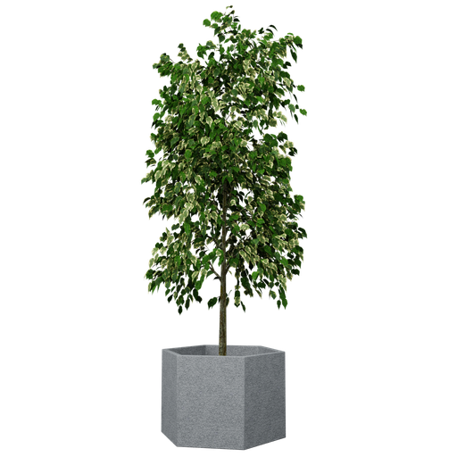 Thumbnail: Plant - Potted tree