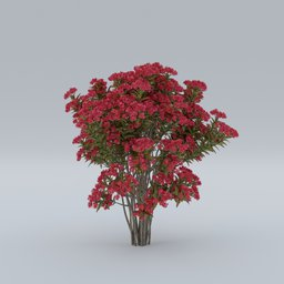 Thumbnail: Lagerstroemia Indica