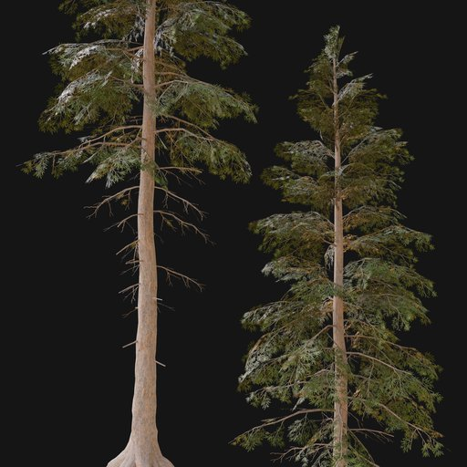 Thumbnail: Norway Spruce Tree MED 01