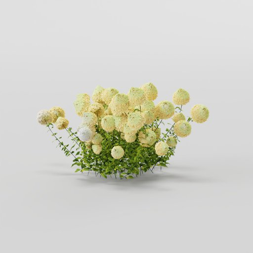 Hydrangea  light yellow