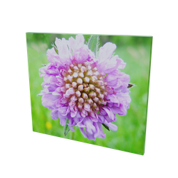 Thumbnail: Flower picture