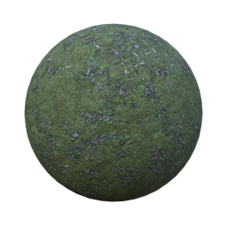 Thumbnail: forest ground mossy