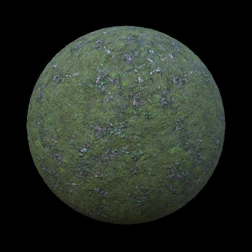 forest ground mossy