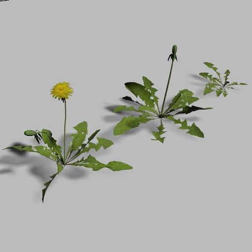 Thumbnail: Dandelions