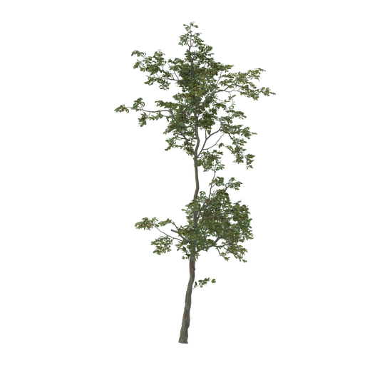 Thumbnail: Thin tree