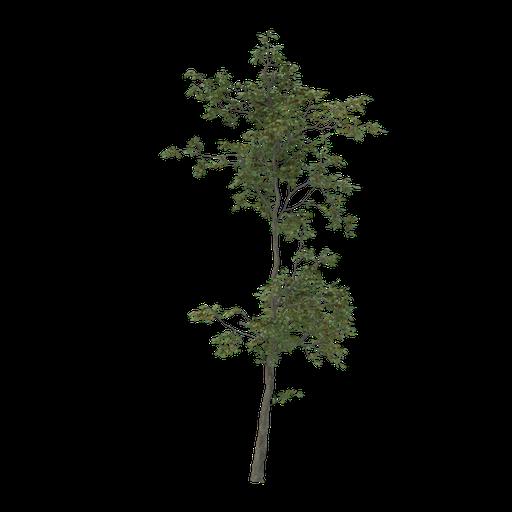 Thumbnail: Thin tree