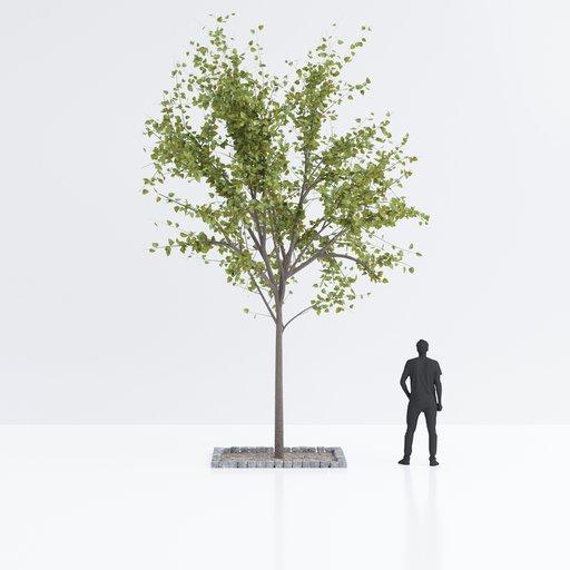 Thumbnail: Urban tree