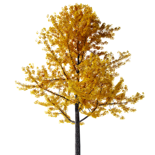 Gimko Tree Autumn