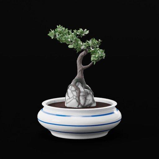 Thumbnail: Bonsai Plant On Rock In Blue White Vase