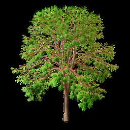 Thumbnail: Green leaved tree
