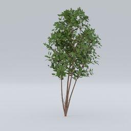 Thumbnail: Gardenplant