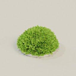 Thumbnail: Decorative plant