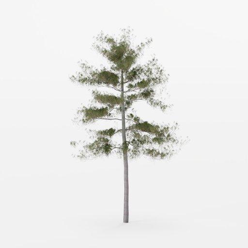 Thumbnail: Pine