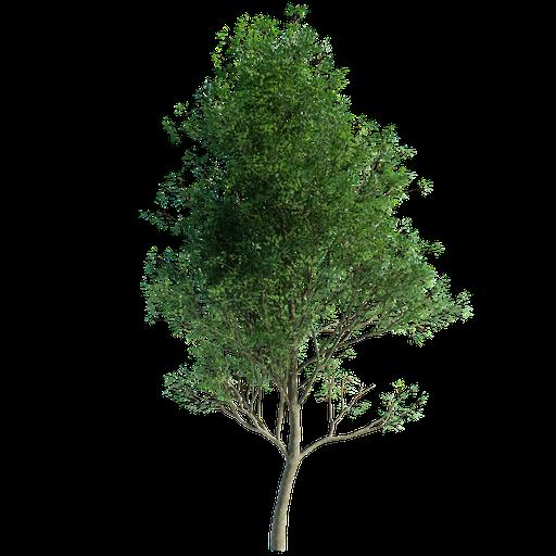 Thumbnail: Tree Random 00