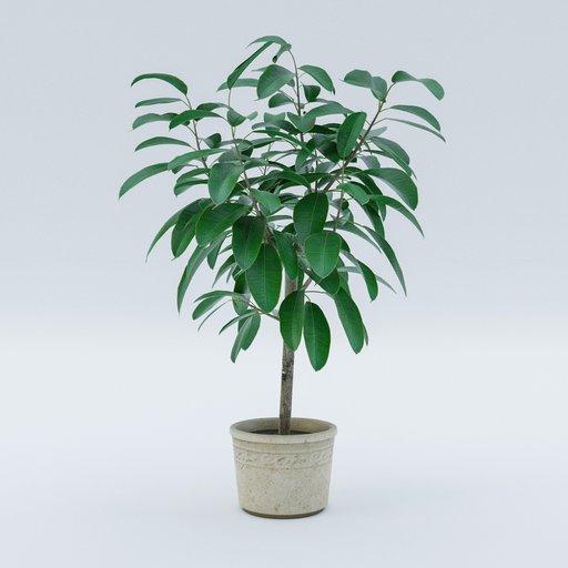 Thumbnail: Plant G