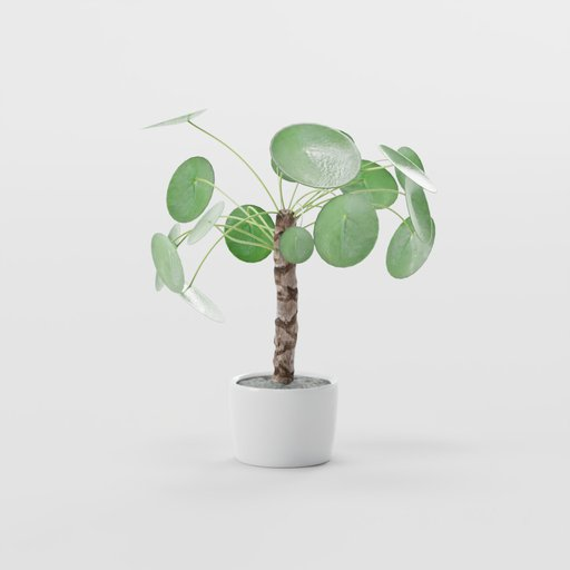 Thumbnail: Chinese Money Plant