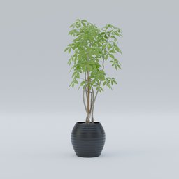Thumbnail: Japanese plants