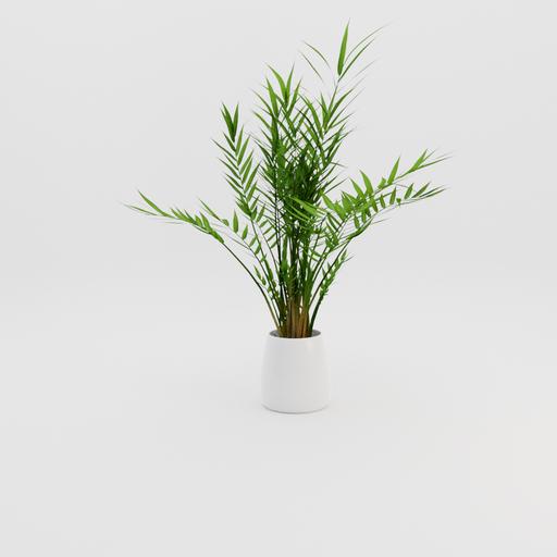 Thumbnail: Plant 001