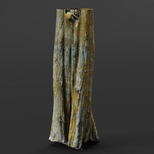 Cedar Tree Trunk 04
