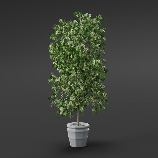 Thumbnail: Plant - Small tree