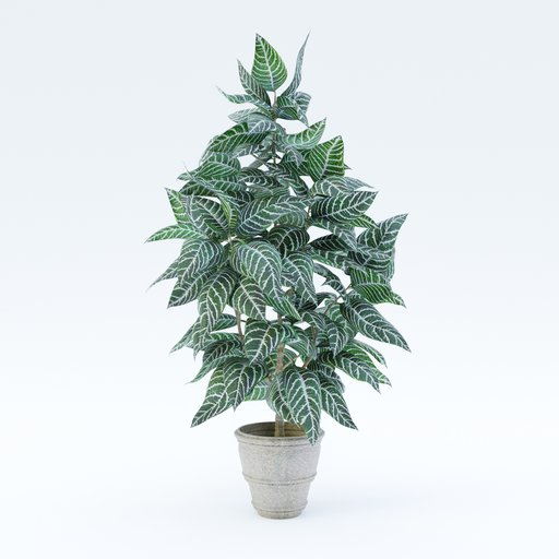 Thumbnail: Zebra plant
