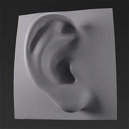 Thumbnail: Ear