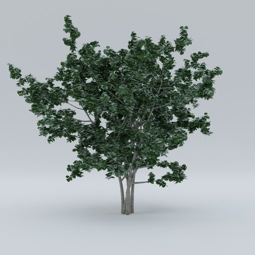 Thumbnail: Small garden tree