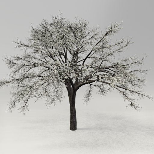 Thumbnail: Cherry Blossom Tree