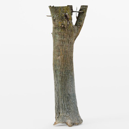 Thumbnail: Photoscanned Tree Trunk