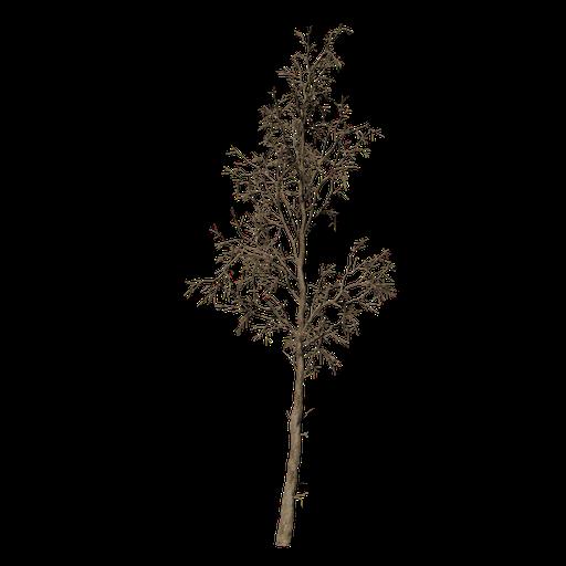 Thumbnail: Dead Tree v3